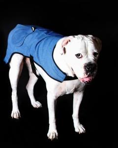 HealFast Dog